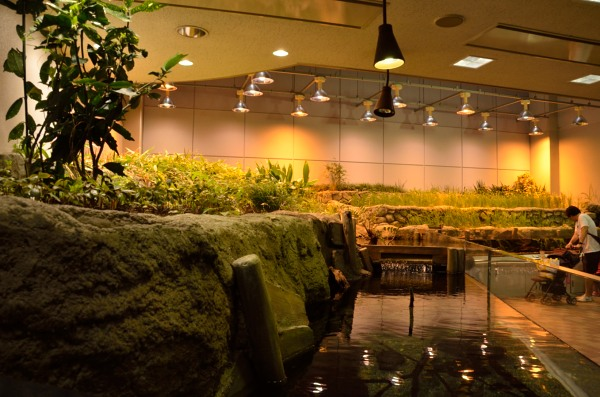 東山動植物園 世界のメダカ館