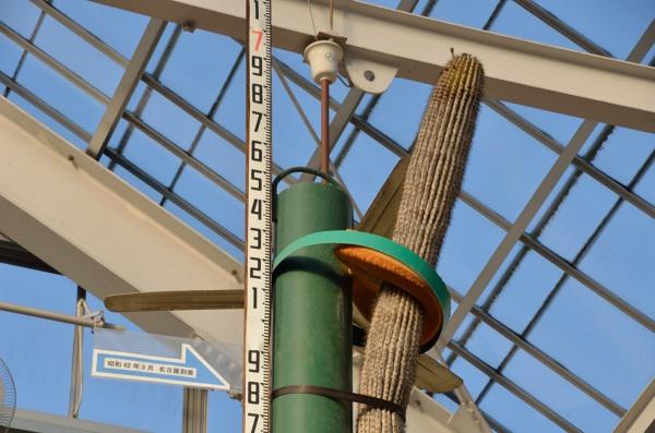 東山動植物園 弁慶柱