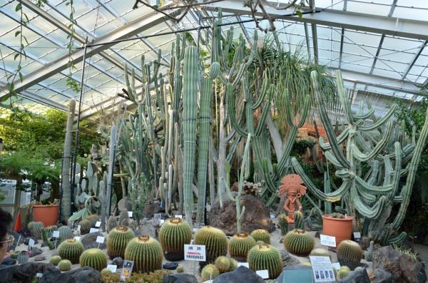 東山動植物園 サボテン