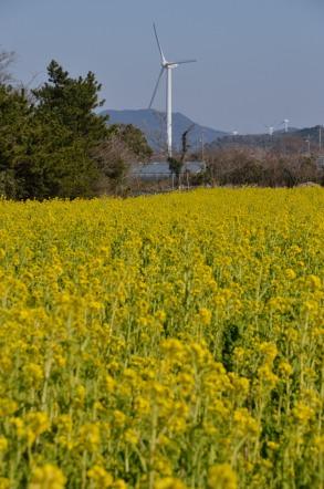 菜の花畑バス停 風車