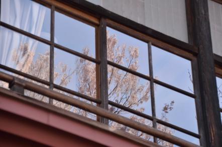 高遠閣 桜