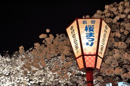 五条川 桜祭り 夜桜