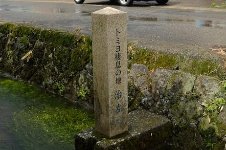 治左川 梅花藻 トミヨ