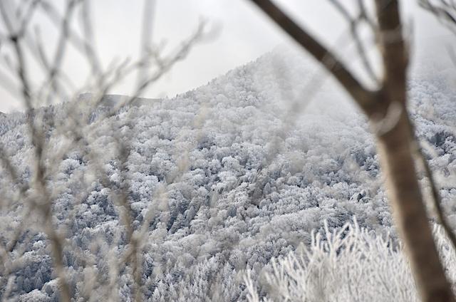 南沢山 ふるさと村自然園登山道 霧氷 富士見台高原方面