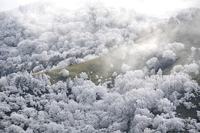 横川山 山頂 霧氷のカラマツ