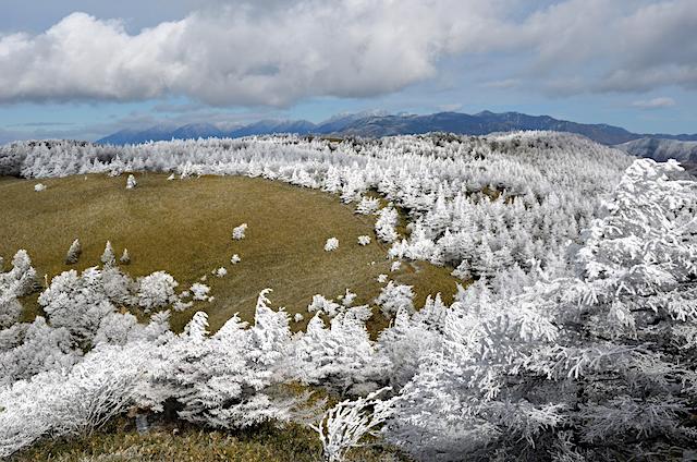 下山 横川山〜南沢山 カラマツの霧氷