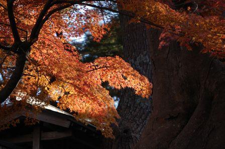 五大堂横の紅葉