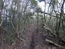 岩坂峠 金山 登山道