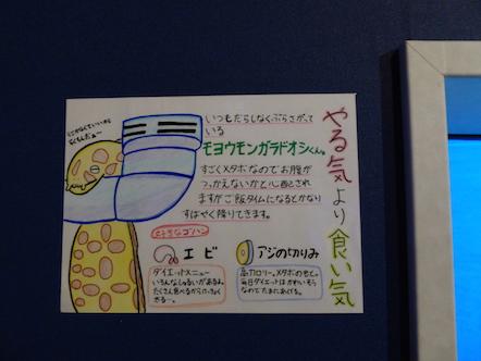 竹島水族館 モヨウモンガラドオシ