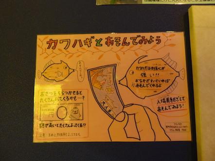 竹島水族館 カワハギ
