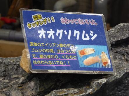 竹島水族館 さわりんプール オオグソクムシ