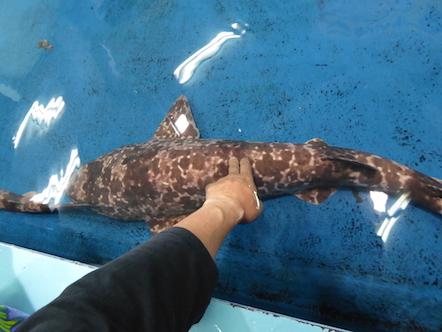 竹島水族館 さわりんプール
