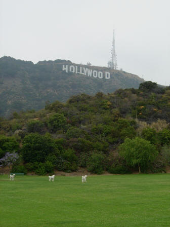 hollywood hill and sign from dog park