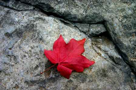 Stone and leaf