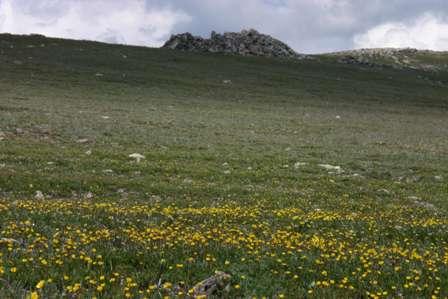 Fall River Pass, Alpine Visitor's Center, RMNP
