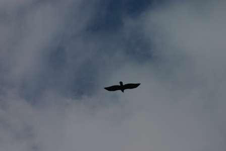 Unaweep / Tabeguache Scenic Byway, Bird