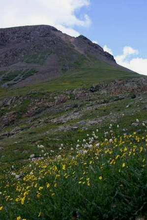 wildflowers and mountains, san juan range, colorado