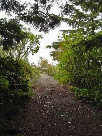 Path, Mt. Walker Lookout