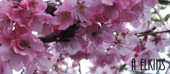 blossoms 4