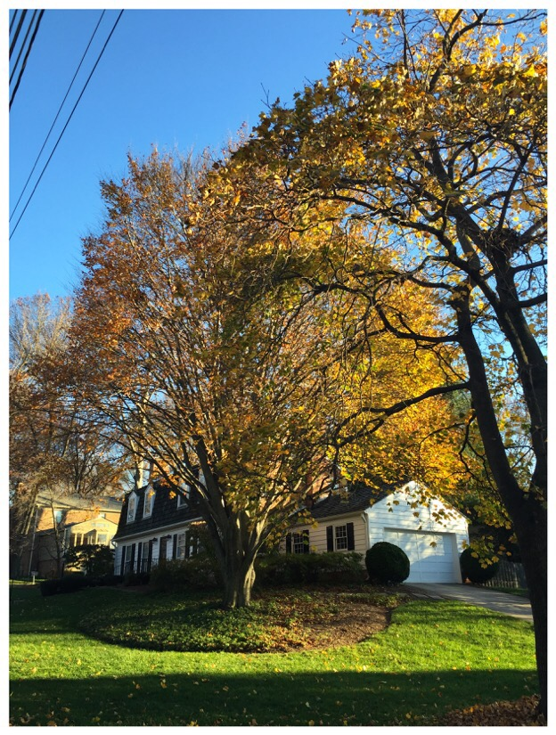 it was a beautiful afternoon in kensington, maryland