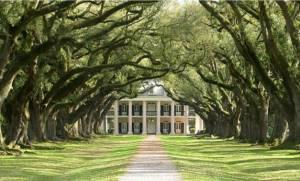 plantation