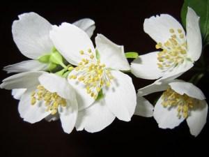 flower-363278_640