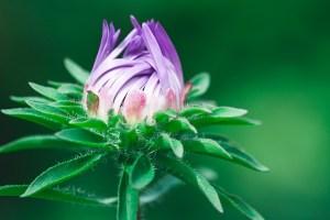flower-1612492_640