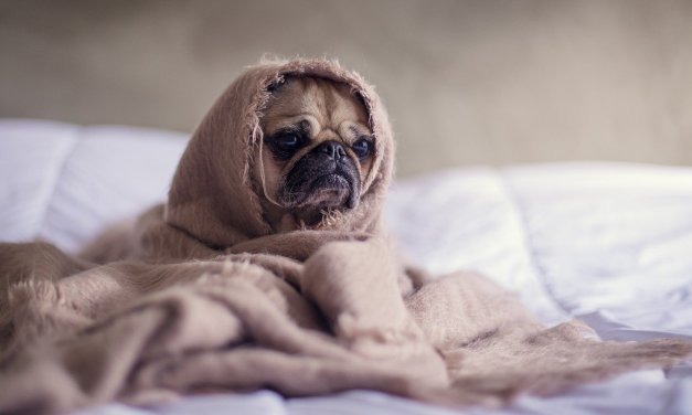 11 Cute dogs for Monday Morning