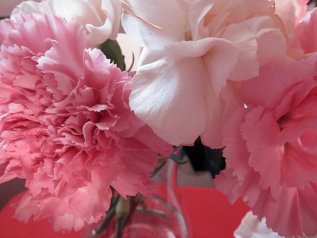 あなたの花
