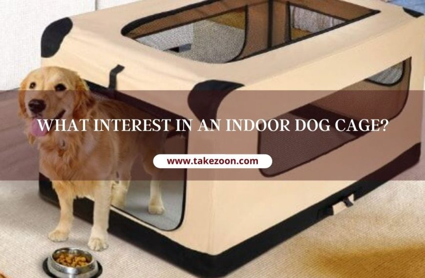What Interests In An Indoor Dog Cage?