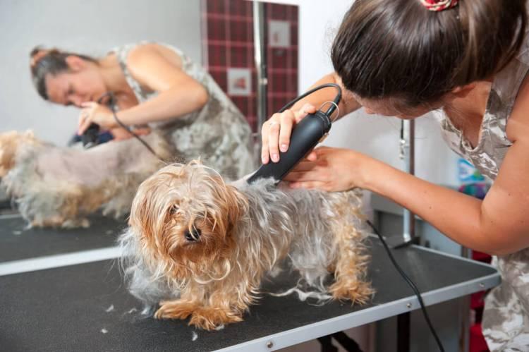 best pets clipper
