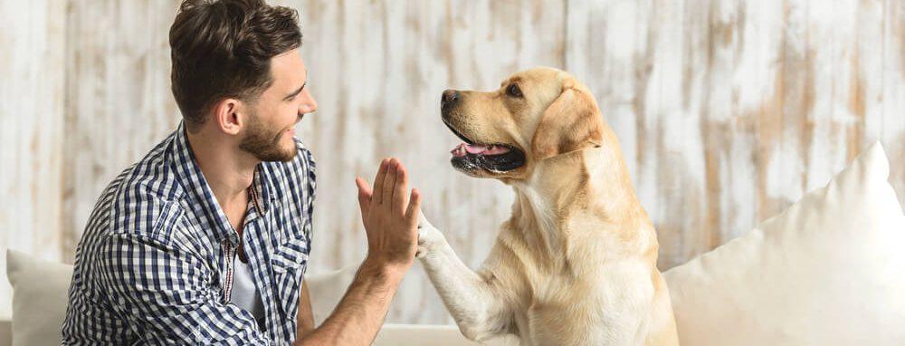 care of dog