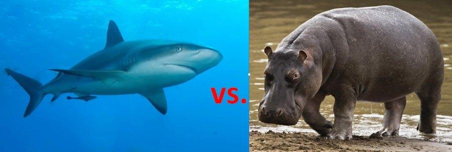 Deadlier Shark or Hippo?