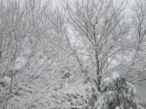 Winter Wonderland (5/5)