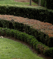 Nice use of hedging varieties -- use with restraint