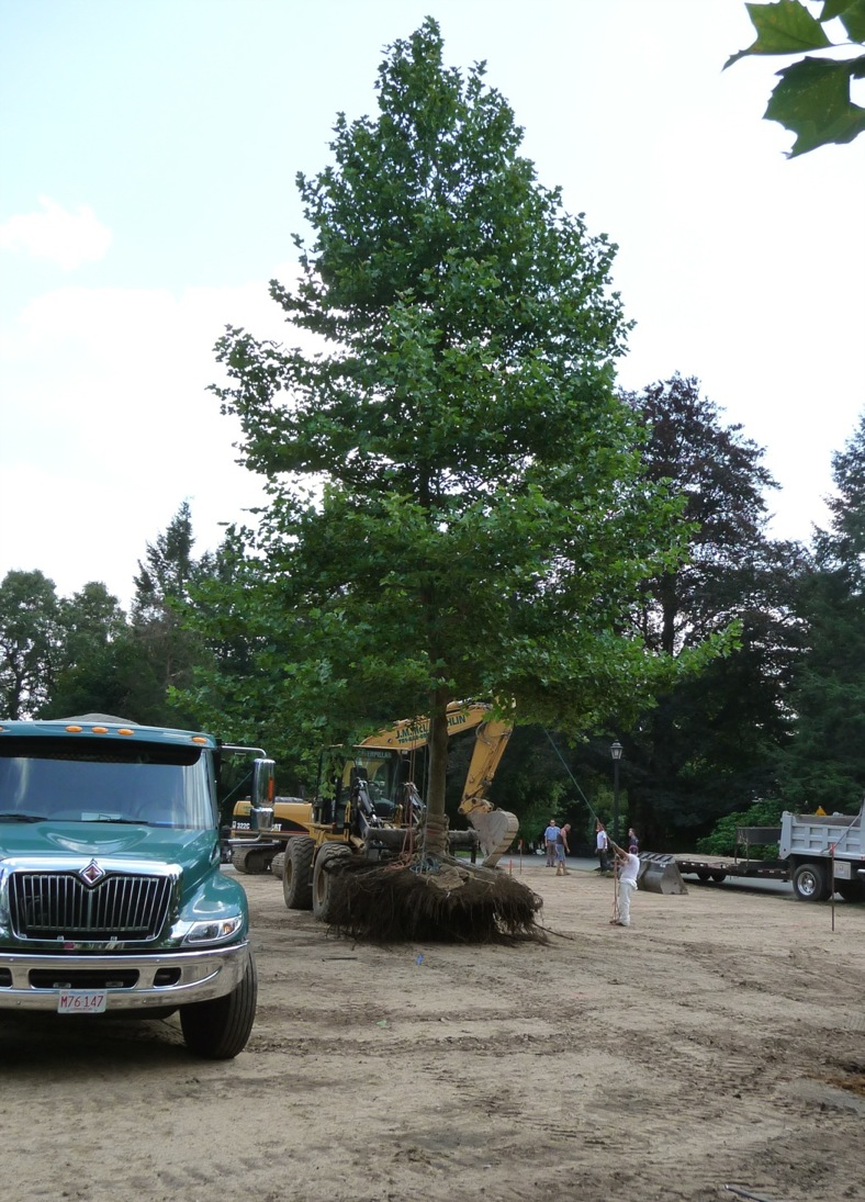 Big machine, bigger tree.  The root plate on this tree extended about 18 feet across at its maximum width.  Transporting a large, upright live tree is a slow-speed operation.