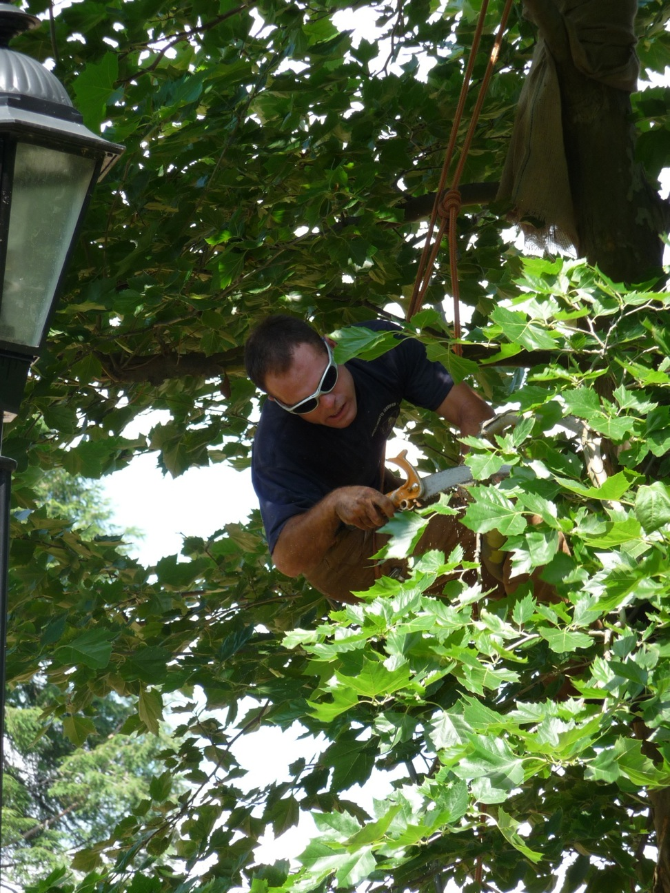Minor pruning to fix a lamppost-branch conflict.