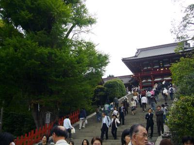 Kamakura Hachimangu shrine steps