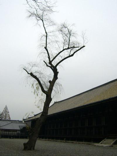 Sanjusangendo leaning tree