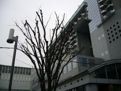 A tree at Kyoto Station