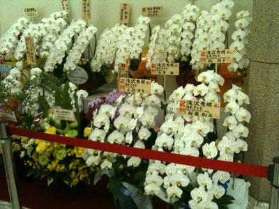 congratulatory flowers