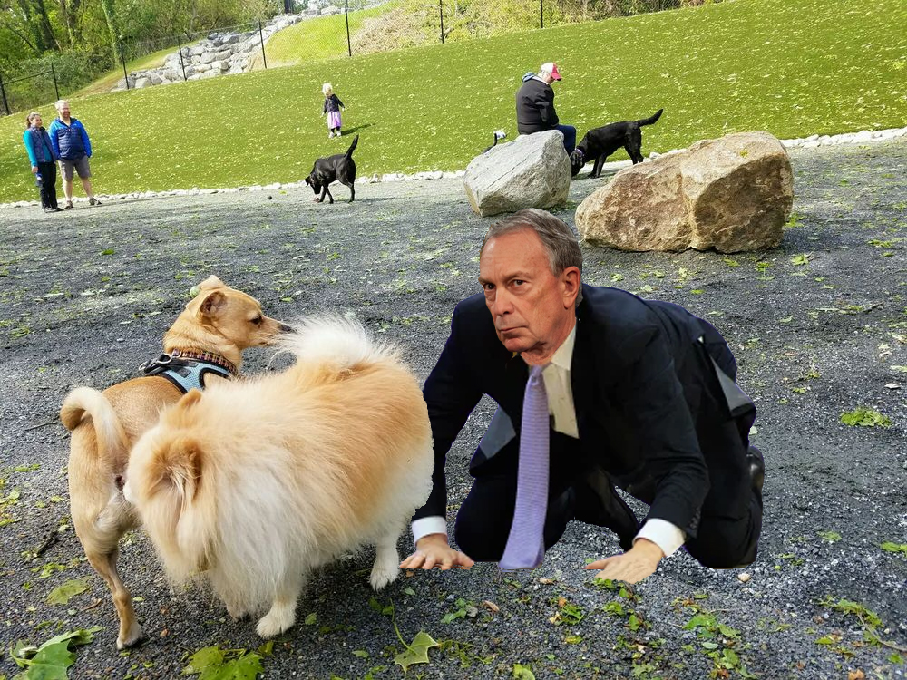 """Bloomberg Creates Controversial """"Stop and Sniff"""" Policy at City's Dog Park"""