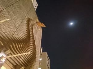 夜の産創館、空には満月です