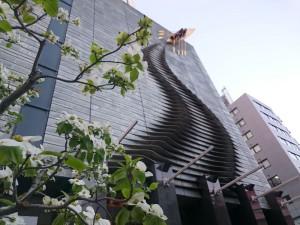 大阪産業創造館の玄関脇のハナミズキがキレイに咲いています