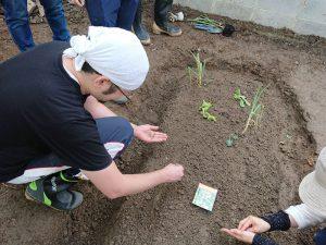 多比羅さんも畝に野菜を植えていきます