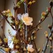 寒桜のつぼみがほころび始め、咲いているものも