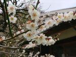 春の奈良山添村で自然農を始めます!第2回の天地返しです(前編)