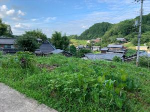 山添村の自然農法の畑(7月7日)