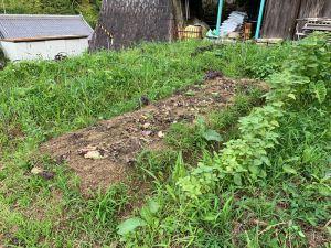 ジャガイモが植えてあった畝