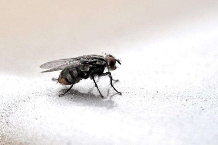 народное средство от насекомых